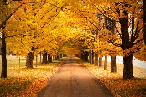 autumn_drive_heather_rushton